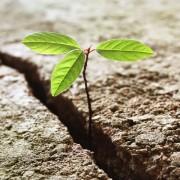 resilienza-coaching-narrativo